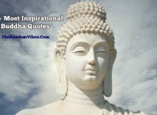 Buddha Quotations Sayings