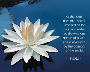 Lotus Flower Quotes Buddha