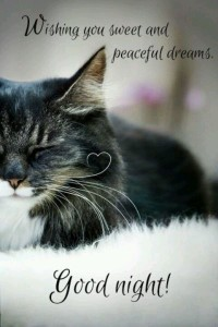 good-night-moon-quotes-images-dreams-cat