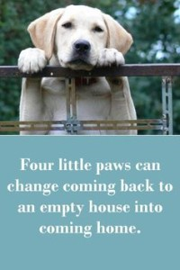Cutest Random Quotes Dog Images