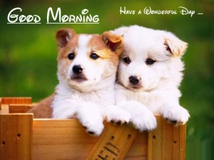 Good Morning Cards with Dogs Images