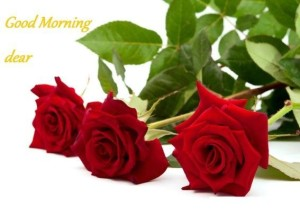 Romantic Flower Good Morning Card Images