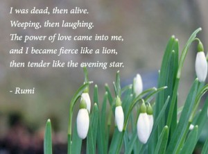 Rumi Quotes on Loss image