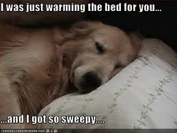 Awesome Quotes about Dogs and Sleeping IMages