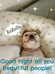 Beautiful Good Night Meme Dogs Pics