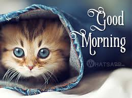 Best Good Morning Cat Meme HD Facebook Images