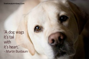 Deep Quotes about Dogs with Images