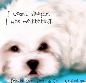 Funny Dog quotes and sayings images