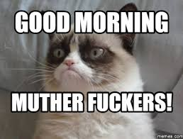 Funny Good Morning Memes Cat Images