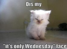 Funny Memes about Wednesday