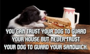 Funny Quotes about Dogs with Images