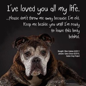 Quotes about Dogs Getting Older Images