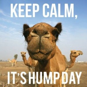 Wednesday Meme Camel