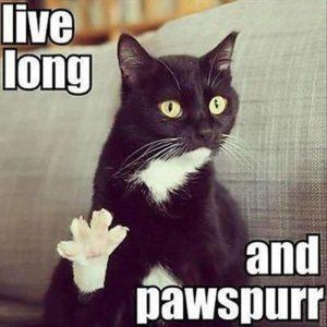 grumpy cat happy birthday meme
