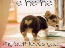 Funny Love Memes Picture