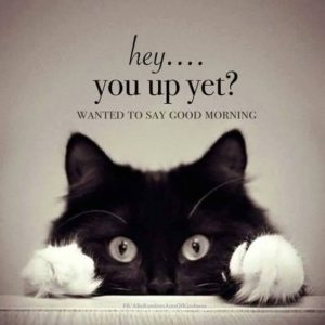 Good Morning Quotes Funny