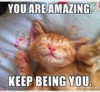 Encouraging Cat Meme