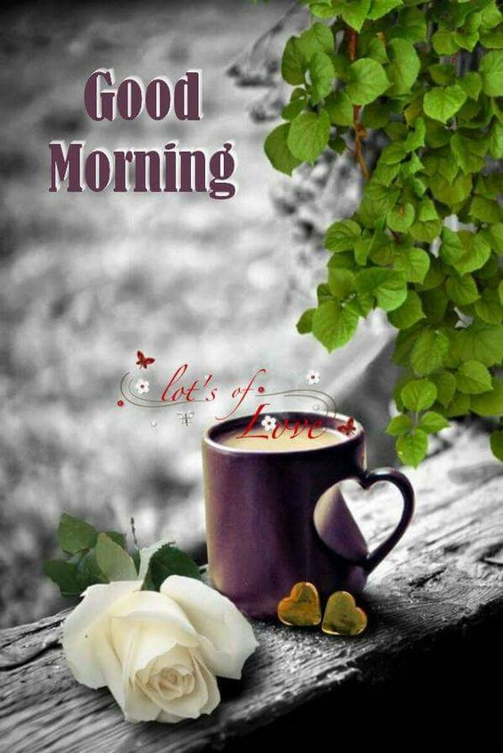 Good morning wishes and greetings the random vibez good morning wishes and greetings m4hsunfo