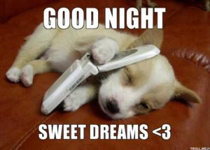 Cute Good Night Animal Images