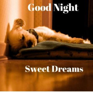 Cute good night images for Whatsapp