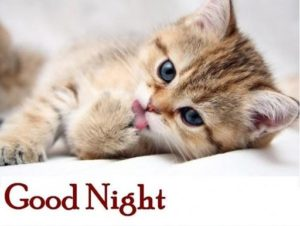 Nice and Cute good night images