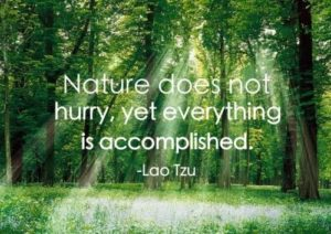 Witty Quotes about Nature