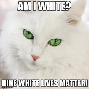 Best White Cat Meme