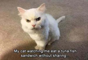 Funny White Animal Cat Meme Image