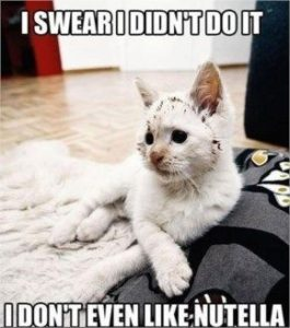 Funny White Cat Images