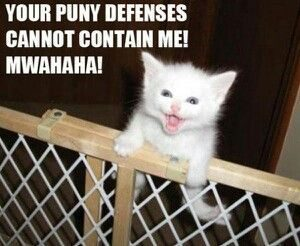 Furry White Cat Meme