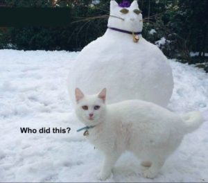 The White Cat Meme