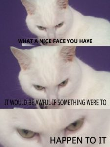 White Cat Meme Face
