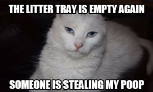 White Cat Meme Pictures