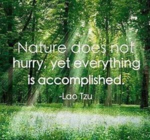 Famous Nature and Life Quotes
