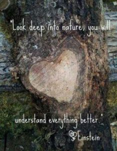 Positive Quotes about Nature and Life