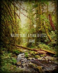 Quote about Nature and Life