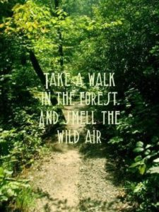 Quotes for Nature and Life