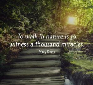 Quotes on Life and Nature