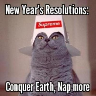 Happy New Year Cat Meme