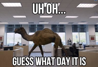 Hump Day Camel Meme