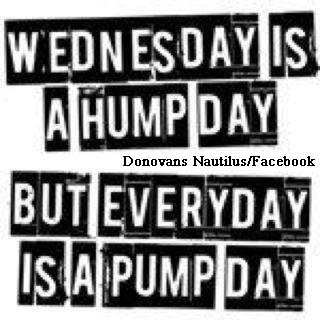 Hump day meme quotes