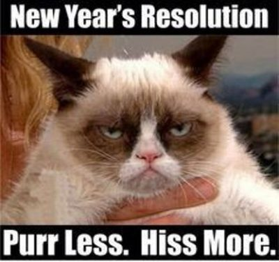 New Year Cat Memes