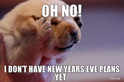 New Year Memes On Dogs