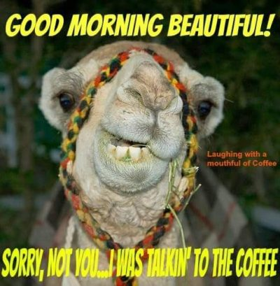 Camel Meme Funny Quote