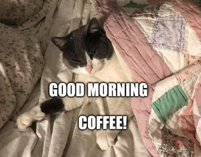Good Morning Coffee & Cat Meme