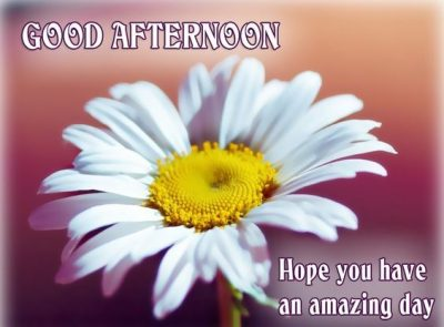 Wonderful Afternoon Quotes
