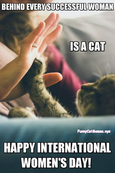 Cat Memes For Women's Day