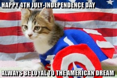 Independence Day Cat Memes