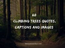 60 Climbing Trees Quotes, Captions And Images