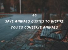 60 Save Animals Quotes To Inspire You To Conserve Animals